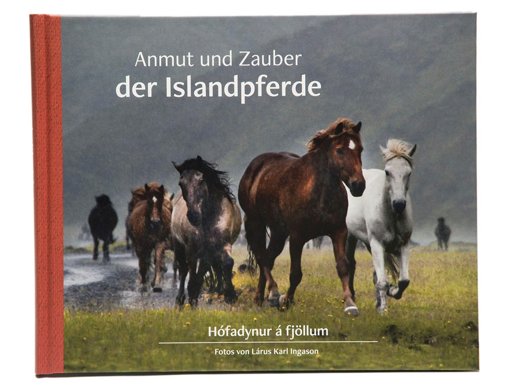 Mountain Rides on Icelandic Horses